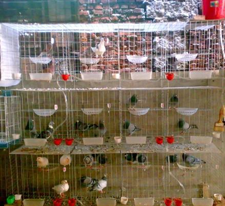 鸡鸽兔笼养殖笼具笼具设备养殖用具五金丝网