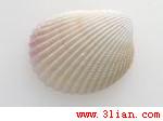 芦荟丝素胶原保湿剂/水溶性甲壳素/低甲醛洗可穿免烫树脂