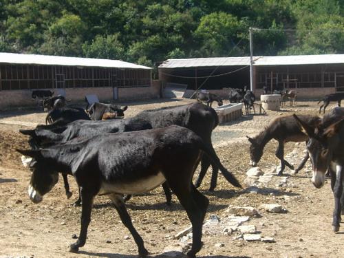 驴的营养需要与无公害饲料