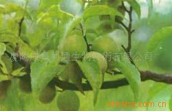 上海世冠恒化工原料有限公司的形象照片