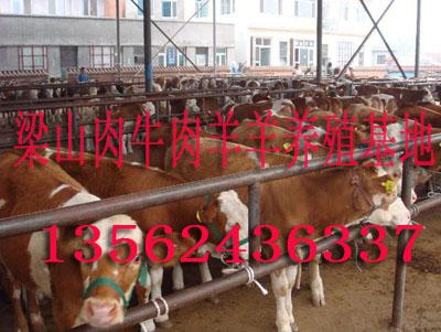 肉驴、改良肉牛、波尔山羊、小尾寒羊、育肥牛