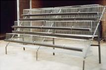 鸡鸽兔笼笼养设备笼具设备养殖网食盒饮水器
