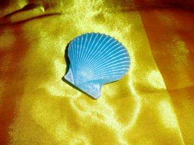 海洋系列-贝壳