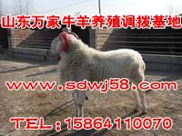 山东养羊场|山东大型养羊场|山东养羊