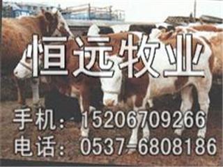 育肥牛养殖技术-育肥牛养殖效益