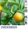 柚皮甙Naringin P.E.