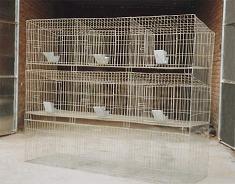 鸡鸽兔笼狗笼鸟笼宠物笼鹌鹑笼老鼠笼等养殖笼具