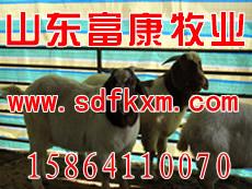 江苏海门养羊规划图 养羊场管理模式圈养羊技术