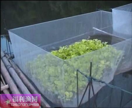 专业黄鳝/泥鳅养殖网箱