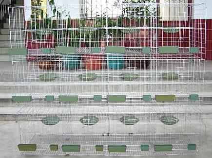 养殖笼具、鸽子笼、兔笼子、鸡笼、铁丝网、动物笼