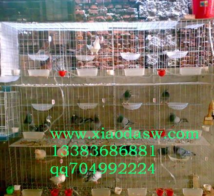 鸡鸽兔笼饮水器托粪板丝网养殖用具笼具配套设备