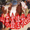 近期牛羊养殖效益分析