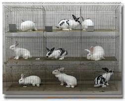 养殖笼具 兔子笼 自动饮水器