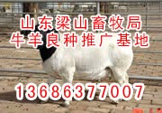 供山东济宁畜牧局诚信牧业种牛羊养殖供求基地