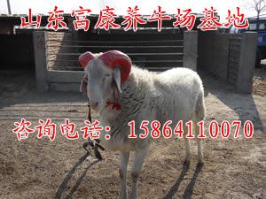养羊场管理模式 养肉牛财经网江西奉新养殖厂