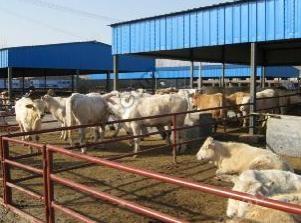 辽宁肉牛 内蒙古肉牛 吉林肉牛 江西肉牛 山西肉牛 陕西肉牛