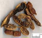 染料木素Genistein