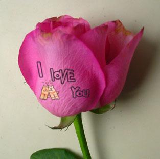 鲜花刻字机 花语玫瑰机 数码美甲机