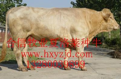 西门塔尔牛、育肥牛犊、鲁西黄牛、小尾寒羊、波尔山羊