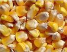 襄樊回丰粮油饲料有限公司采购大米玉米大豆高粱绿豆豆粕大小麦等