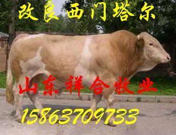 肉牛种苗,肉牛牛犊 波尔山羊 育肥牛犊 山东肉驴