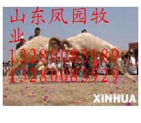 中国牛羊养殖信息网牛羊供求基地牛羊育肥效益分析牛羊市场价格山东