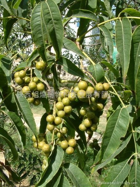 盐酸小檗碱/盐酸小檗胺/盐酸青藤碱