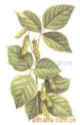 大豆甙元/大豆异黄酮