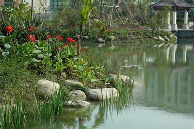 人工湖生态设计