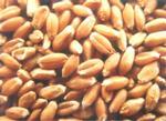 武泰求购小麦,花生粕,东北大米