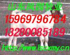 山东凤园牧业肉牛羊养殖供求基地畜牧牛羊养殖信息肉牛羊养殖图片