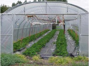 大棚膜特点-用途|温室大棚膜