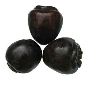 黑柿甜柿苗、紫叶矮樱苗、钙果苗