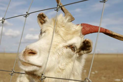 草原围网、牛栏网、养殖网