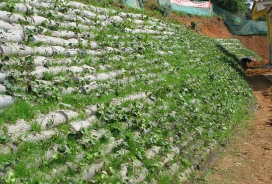 承接生态护坡工程/生态护坡工程设计施工/绿色边坡/生态边坡