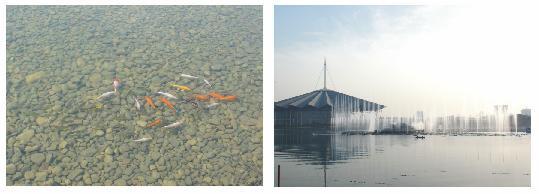 景观湖水处理/养殖废水处理/生态水处理/阿科蔓水处理/生活污水处