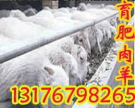 供应现在种羊价格湖南波尔山羊价格岳阳养羊场