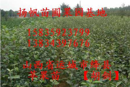 供应桃树苗、杏树苗、葡萄苗、枣树苗、苹果苗