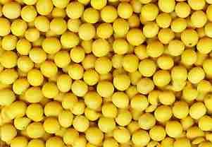 求购玉米碎米小麦大麦高粱大豆豆粕客户第一诚信至上