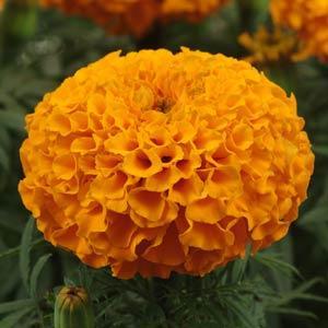 赤峰鑫卉园艺花卉种子有限公司的形象照片