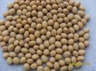 芝麻小麦高粱面粉黄豆红豆