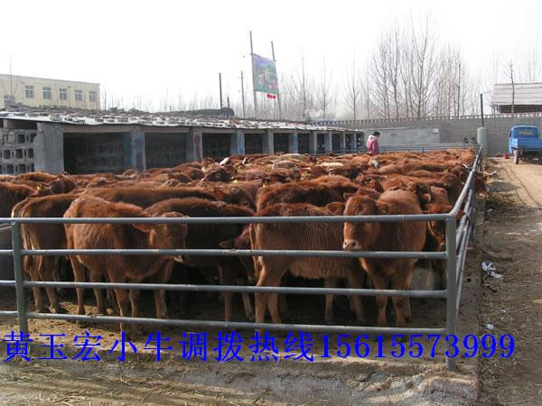 肉羊养殖场|波尔山羊|小尾寒羊|羔羊|养羊场天宏牧业