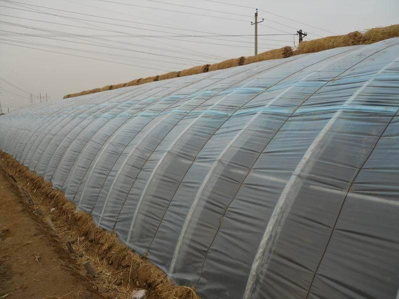 现代农业温室大棚