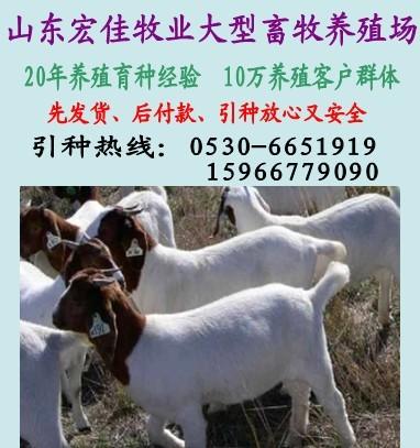 安徽养羊场,安徽哪里养羊场