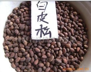 白皮松子,白皮松籽,白皮松籽价格,出售白皮松籽