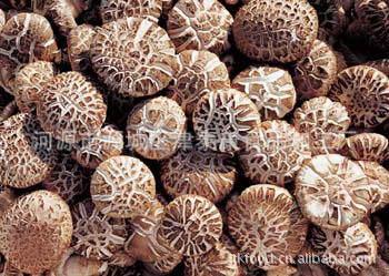 食用菌 花菇 津泰康 广东特产 原材料 真菌 白蘑科 野生菌