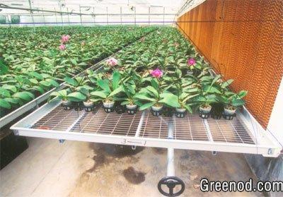 苗床网 热镀锌苗床网 温室苗床网 苗床网片 养花网-安平信志恒