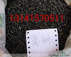 售;榆树种子|栾树种子|腊梅种子