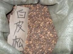 白皮松种子,核桃种子,软枣种子,山桃种子