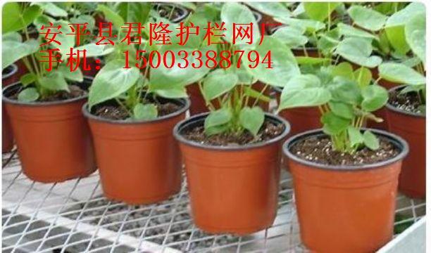 苗床网|温室苗床网|镀锌苗床网片|植床网片|养花网